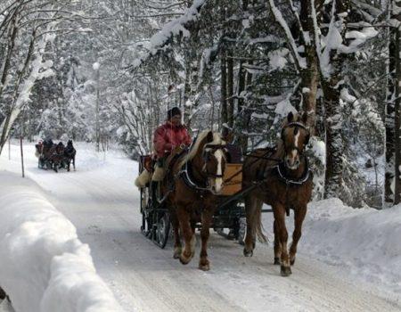 Winter Pferde Schlittenfahrt